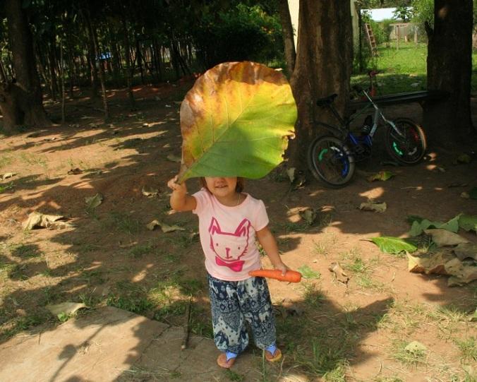 teak leaf dec 2015